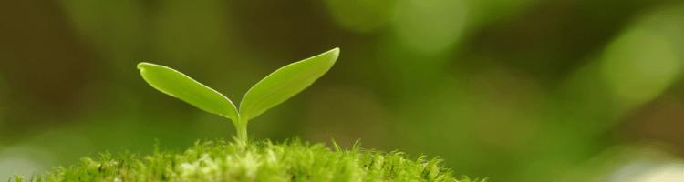 Saiba mais sobre as vagas de Estágio no Ministério do Meio Ambiente