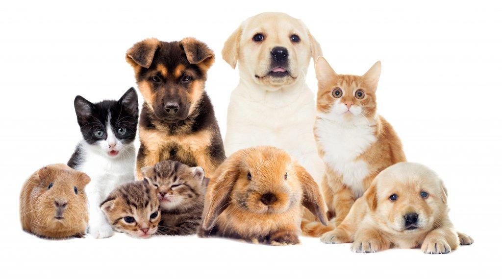 5 ideias para investir no segmento de PETs