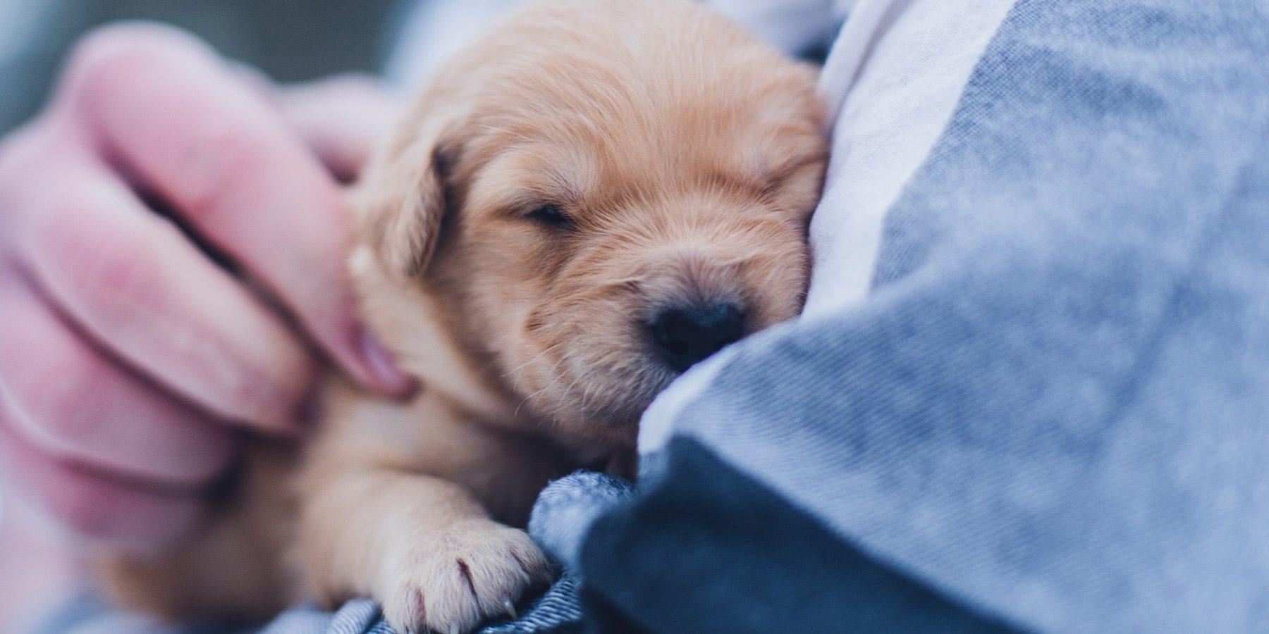 3 formas alternativas para promover uma clínica de pets
