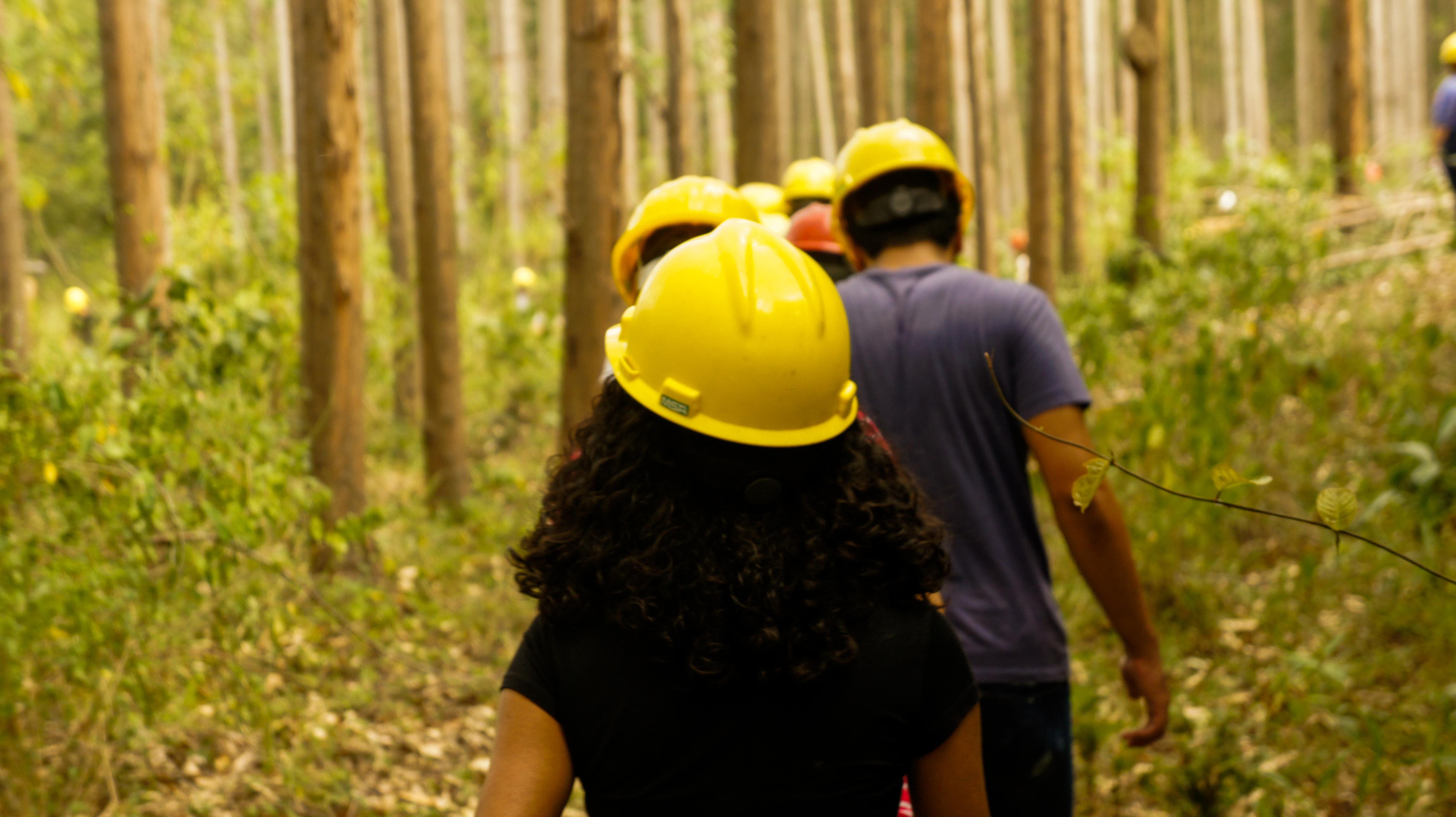 Veja por que a engenharia florestal será importante no futuro
